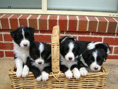 A Basket of Babies ♡