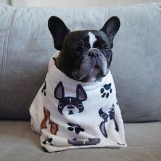 """OMmmmmmmm"", a very Zen French Bulldog."