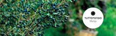 Il #mirto è una pianta tipica della macchia Mediterranea. In Sardegna cresce in abbondanza e spontaneamente ed è un simbolo di questa terra fiera e selvaggia.  La collezione di prodotti corpo al Mirto di #Tuttotondo è dedicata a chi ama l'appagante tranquillità dell'acqua e della natura.