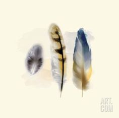 Three Feather Study 2 Art Print by Evangeline Taylor at Art.com