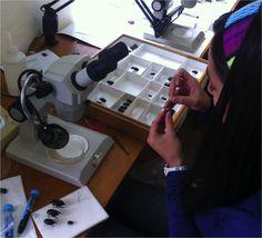 Colección Entomológica Instituto Humboldt