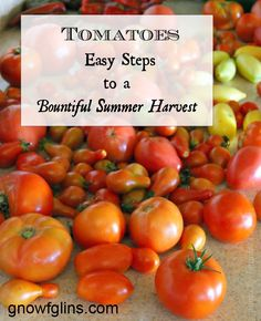 Tomatoes: Easy Steps to a Bountiful Summer Harvest   As every gardener knows, once you taste your own homegrown tomatoes, you'll never go ba...