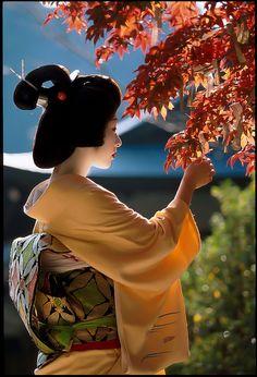 geiko Umesato by WATASAN on Flickr