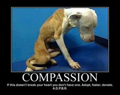 we need more compassion in this world!!
