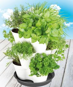 Complete Herb Garden with 9 Different Herbs.  http://www.spaldingbulb.co.uk/product/complete-herb-garden-with-9-different-herbs/ ❤️