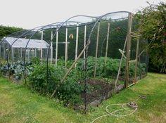 Garden Cage to possum-proof veg garden