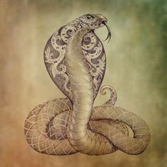 Illustrazione: Tattoo snake cobra with open cowled
