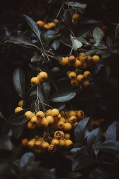 Photography still life forests Trendy ideas Dark Photography, Still Life Photography, Amazing Photography, Foto Instagram, Photo Tree, Belle Photo, Nature Photos, Aesthetic Pictures, Fresco