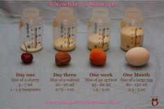 size of a newborns stomach
