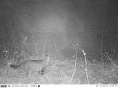 Wild Wood en Provence: cat and buzzards