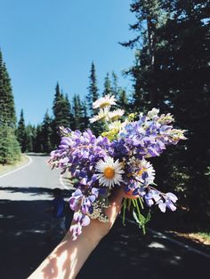 Hurricane Ridge, WA // creds: alinayer Bunch Of Flowers, Wild Flowers, Beautiful Flowers, Flowery Wallpaper, Colorful Wallpaper, Hurricane Ridge, Bloom Where Youre Planted, Insta Photo Ideas, Neverland