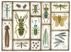 Beetles Weevils and Flies No. 8 by Golly Bard