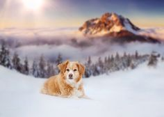 Winterwonderland - http://www.facebook.com/kohlerlinda
