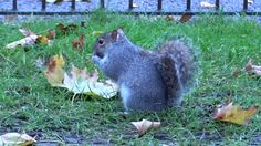 Esquilos no Hyde Park - Londres- Sony HX400V