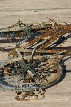 Abandoned bike : 2010 Ile de Ré!