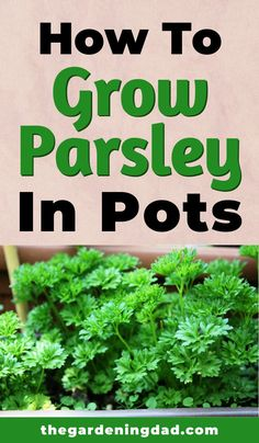 Did you know you can grow parsley all year, no matter where you live? Learn How to Grow Parsley in Containers with easy Herb Garden Design, Diy Herb Garden, Home Vegetable Garden, Garden Plants, Pot Plants, Garden Ideas, Garden Totems, Herb Gardening, Gardening Vegetables