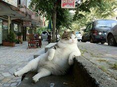 Lazy cat :)