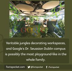 FACTS POCKET | Veritable jungles decorating work spaces, and...