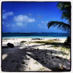 Shadow Palm. San Blas island. Panamá.