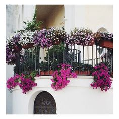 FLOWERY VIEW || Balcony of a home in central Bari, Italy... simply stunning. #Design #Architecture #LandscapeDesign #InteriorDesign #Houzz #Inspiration #Luxury