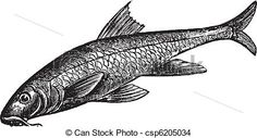 fish engraving - Google Search