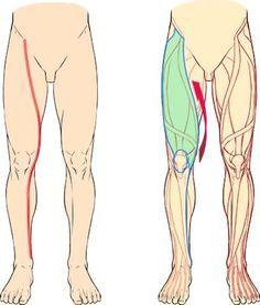 Leg, curves