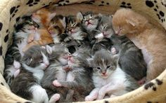 Kitten Pile Click to see more funny cats