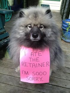 Dogs and pets eat retainers if they are left unattended. Please place in the retainer case given to you, it will keep them safe. Wear you retainer as directed and if you lose it, call Young at Heart Orthodontics right away for a replacement Dental Braces, Teeth Braces, Dental Care, Dental Health, Orthodontic Humor, Braces Humor, Orthodontics Marketing, Banners, Dental Jokes