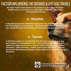 Factors influencing the distance a lost dog travels...http://www.lostdogsillinois.org/