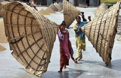 Rain hats. Bangladeshi women remove rain covers from rice after the harvest at a farm on the outskirts of Dhaka, Bangladesh. The covers keep the rice dry during the rainy season.
