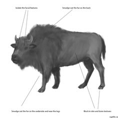 how to draw a realistic buffalo