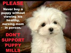 Every pet shop will assure you that their puppies are different. Their puppies don't come from puppy mills, but from wonderful local breeders. Pillars of the community, in fact. The reality is that no responsible breeder would ever place one of their puppies in a pet shop. A breeder who has placed a puppy in a pet shop has disqualified himself as a responsible breeder. Please help educate others, it is the only way to shut them down.