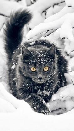 #Snow #Cats Snow Cat