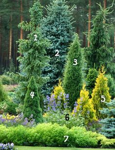 58 Ideas for fruit trees decorations Evergreen Landscape, Evergreen Garden, Garden Trees, Landscaping Trees, Privacy Landscaping, Front Yard Landscaping, Landscaping Design, Landscaping Software, Landscape Edging