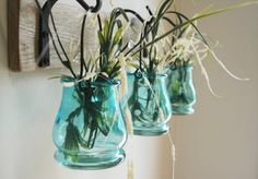 Colored Jar Trio with Wrought Iron hooks by PineknobsAndCrickets, $45.00