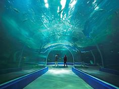 Aqua Planet Yeosu, the largest aquarium in South Korea, features acrylic windows from Reynolds Polymer Technology, Inc, including a 20 foot (6.1m) diameter underwater room connected by two underwater tunnels. Check it out!