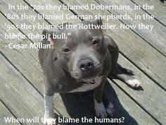 so true. i wonder which breed is next. :(