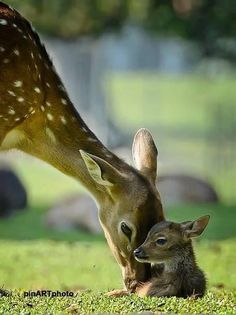Find images and videos about deer, cute animals and baby animals on We Heart It - the app to get lost in what you love. Nature Animals, Animals And Pets, Animals Photos, Beautiful Creatures, Animals Beautiful, Cute Baby Animals, Funny Animals, Mother And Baby Animals, Animal Babies