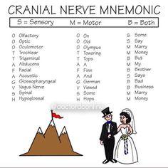 Cranial Nerve Mnemonic #cranialnerve #nerve #mnemonics #brain #neurology…