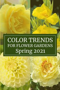"""In December, the color experts at Pantone announced that """"Illuminating"""", a bright and cheery yellow, was their pick for the 2021 Color of the Year. The more we thought about it, the more we had to agree that yellow is a perfect choice. 2020 was such a dark and difficult year. It's time for an about-face. Bring on the yellow! Orange Flowers, Cut Flowers, Colorful Flowers, Dahlia Flower, Flower Show, Flower Colouring In, Most Popular Flowers, Flower Farmer, Mary Mary"""