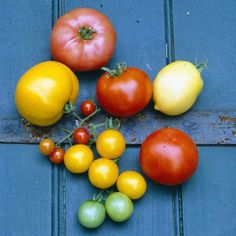 Gardening With Heirloom Vegetables - Organic Gardening - MOTHER EARTH NEWS