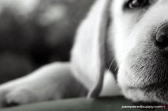 40-Ideas-of-Cool-Photography-with-Dogs-10.jpg (600×400)