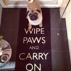Dog version of Eats, Shoots & Leaves. Wipe Paws & Carry On Pugs, Pug Puppies, Pug Love, I Love Dogs, Dog Grooming Shop, Grooming Salon, Pet Spa, Dog Boarding, Dog Life