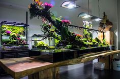 Terrific Free Reptile Terrarium furniture Tips No doubt in which possessing a furry friend would bring lots of pleasure so that you can another person's life. Aquarium Landscape, Nature Aquarium, Planted Aquarium, Tropical Terrariums, Terrarium Plants, Paludarium, Vivarium, Indoor Water Garden, Indoor Plants