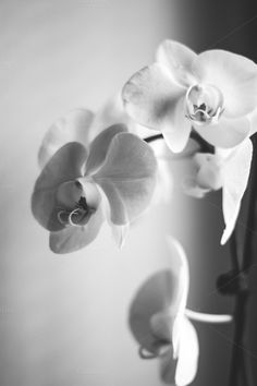 Orchid by Pixelglow Images on Creative Market
