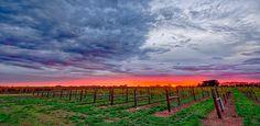 Coonawarra Sunrise by Pieter Pretorius on 500px