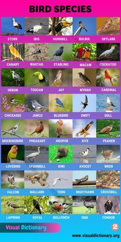 English Vocabulary Words, English Words, English Lessons, Learn English, Names Of Birds, Preschool Charts, Bird Species, Animal Species, Bird Identification