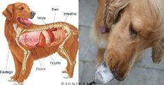 La dieta geneticamente corretta per il tuo cane: 30 cibi super salutari e 12 da…