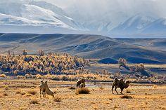 35PHOTO - Валерий Пешков - Алтайские контрасты