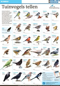 Tuinvogeltelling. Klik hier de interactieve versie aan. Bekijk de vogels en luister naar hun geluid. Onderaan deze pagina is de printversie te zien. Animals Of The World, Animals And Pets, Cute Animals, Bird Identification, Kinds Of Birds, Bird Food, Autumn Garden, Wild Birds, Dream Garden